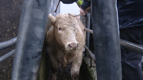 The incidence of bovine TB is higher than this time last year