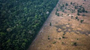 The data was collected by the satellite-based DETER system, which monitors deforestation in real-time