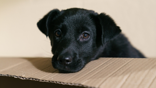 Fears for welfare of new pets