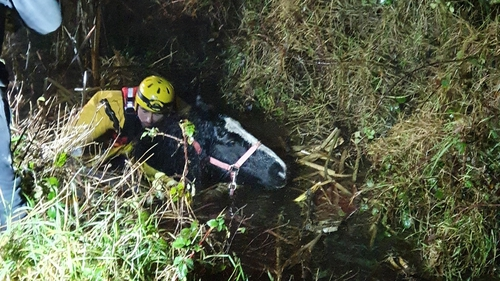 The horse was pulled out and is now recovering at the Hungry Horse Foundation (pic: @gardainfo)