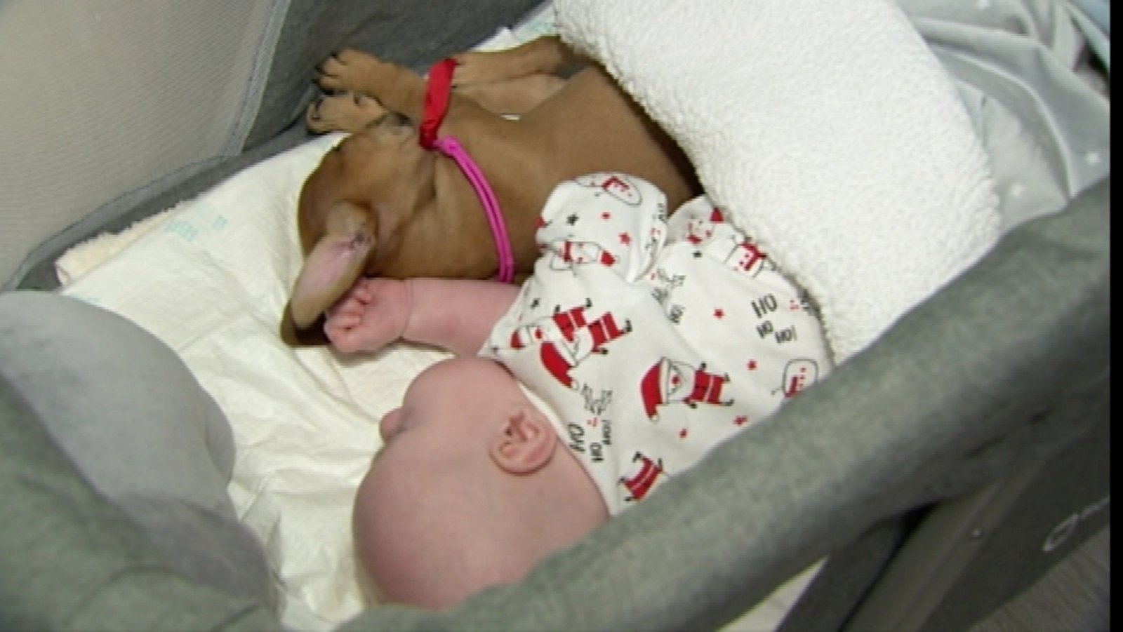 Puppy brings joy to children's hospice in Poland