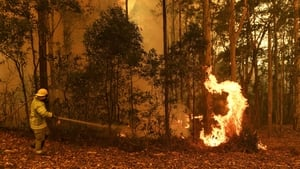A Northern Territory Fire and Rescue firefighter works on the eastern fringes of the Currowan fire at Tomerong
