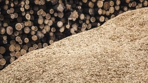 """Sawdust has been proven to remove toxic chemicals from water."" Photo: Getty Images"