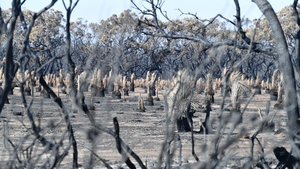 Kangaroo Island has been devastated by bushfires