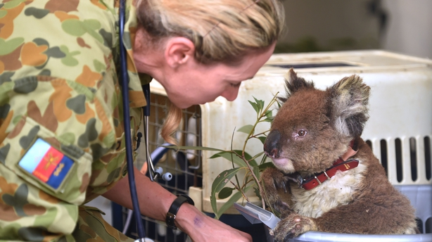 RSPCA Working Hard to Save Animals From Australia Bushfires
