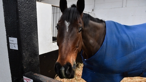 Douvan during a visit to Willie Mullins' yard at Willie Mullins Racing in Bagenalstown, Carlow