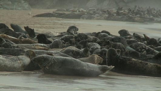 Ending overfishing better than culling seals - IWT