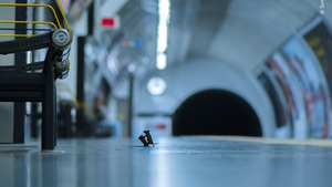 Sam discovered the best way to photograph the mice inhabiting London's Underground was to lie on the platform and wait (Sam Rowley / Wildlife Photographer of the Year)