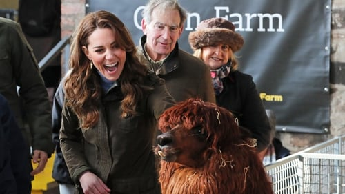 The Duchess of Cambridge befriends an alpaca during her visit to the Ark Open Farm in Newtownards