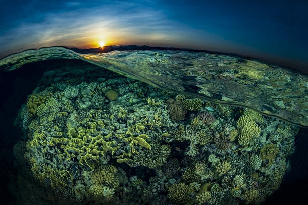 (Tobias Friedrich, Germany, Shortlist, Professional, Natural World & Wildlife, 2020 Sony World Photography Awards/PA)