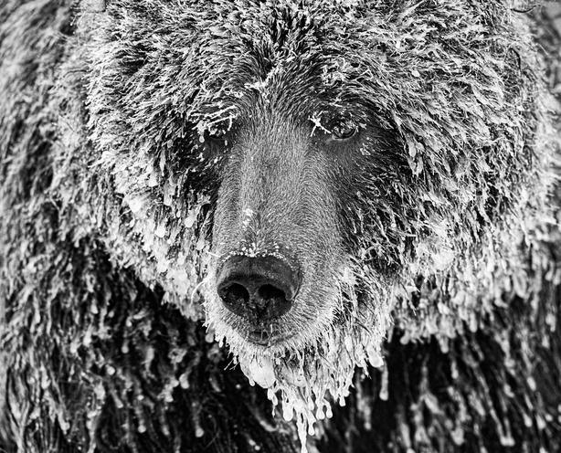 (Marko Dimitrijevic, Switzerland, Shortlist, Professional, Natural World & Wildlife, 2020 Sony World Photography Awards/PA)