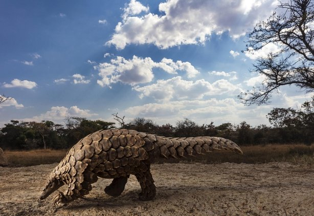 (Brent Stirton, South Africa, Finalist, Professional, Natural World & Wildlife, 2020 Sony World Photography Awards/PA)