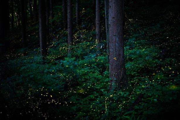 (Masahiro Hiroike, Japan, Finalist, Professional, Natural World & Wildlife, 2020 Sony World Photography Awards/PA)