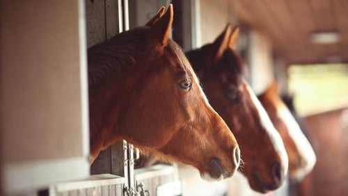 The contaminants were found in horse-feed products in France