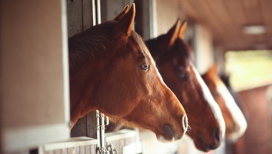 What does Equine Dentistry involve?