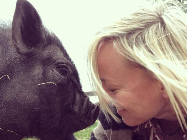 Cathy Davey, My Lovely Horse Rescue
