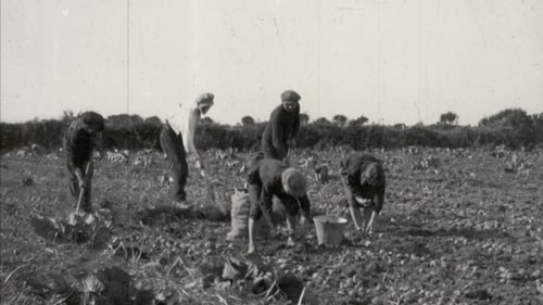 Footage from the film show a family picking potatoes in west Kerry (courtesy of Chicago Academy of Science)