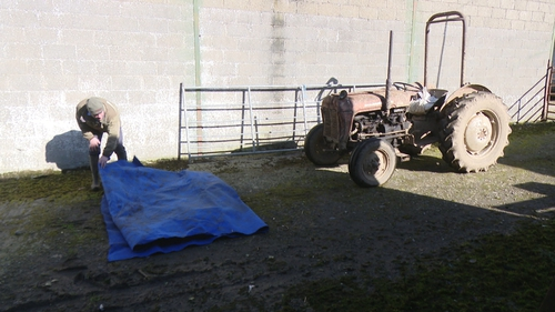 Barry O'Brien Lynch prepares to lay out the carpet in front of his 1940 Massey Ferguson