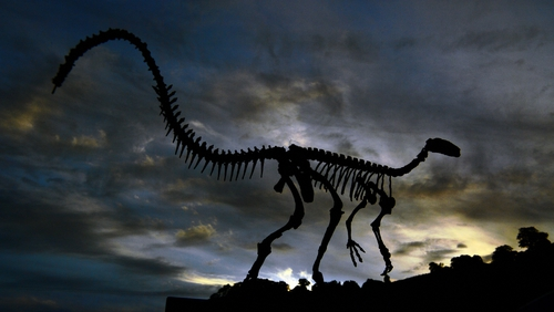The fossilised skeleton of a dinosaur at the CAPPA research support centre for paleontology in Sao Joao do Polesine, Brazil. Photo: Carl De Souza/AFPvia Getty Images