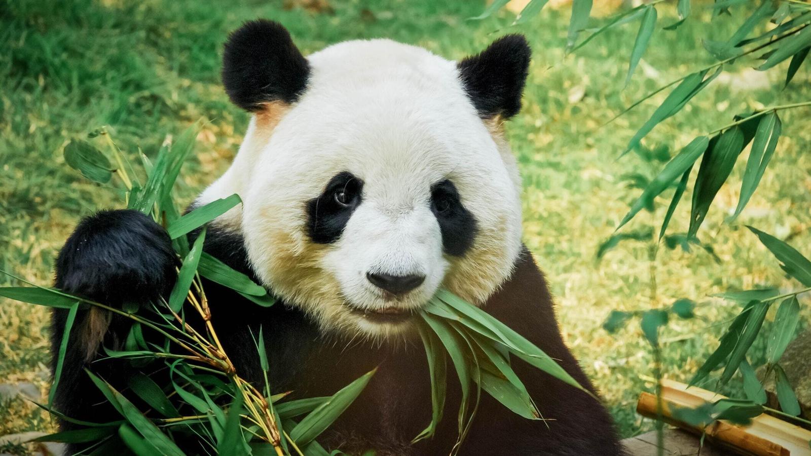 Image result for edinburgh live zoo cam