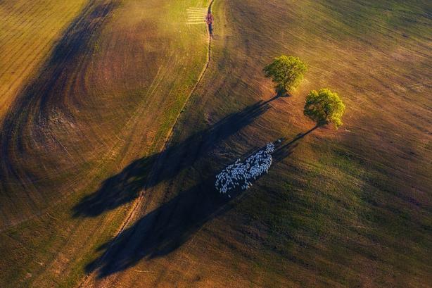 (Marek Biegalski/Nature TTL/PA)
