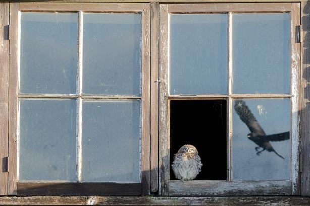 (Paul Holman/Nature TTL/PA)