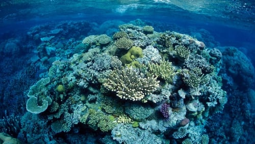 The reef is worth an estimated €3.6billion a year in tourism revenue for the Australian economy