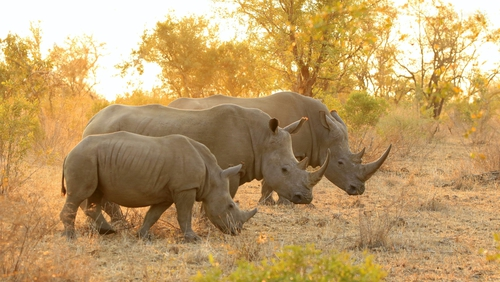 Caverns, roller coasters, and South African safaris.
