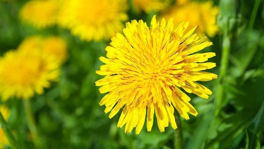 Dandelion introduces a brand new season of Nature File.