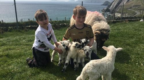 Brothers Tomás and Mícheál Ó Dubhda with the five new lambs