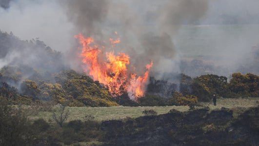 Irish Farmer's Association calls for extension to deadline for burning of scrubland