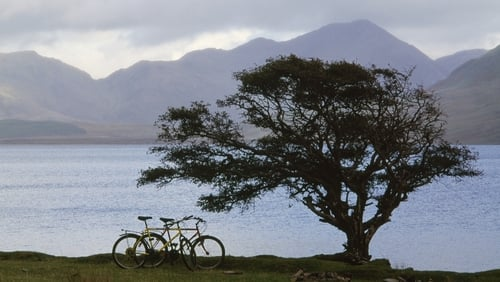 A hawthorn tree at Kylemore Lough in Connemara. Photo: Getty Images
