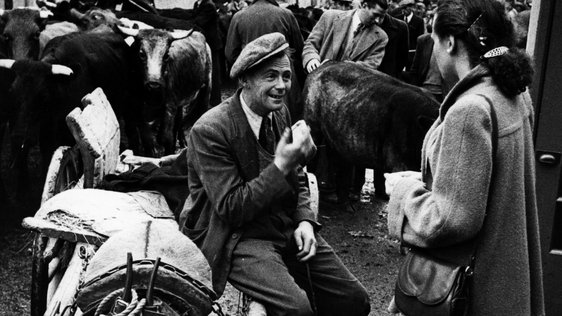 01 Jan 1950 Livestock for Sale at Puck Fair Getty Images