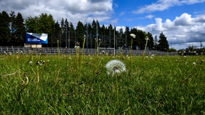 Dandelions are growing on the Avantcard Páirc Seán MacDiarmada