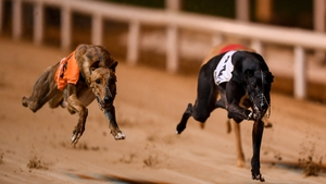 """IGB said it was """"at a loss to understand"""" why greyhound racing has not been included as part ofthe earlier return date"""