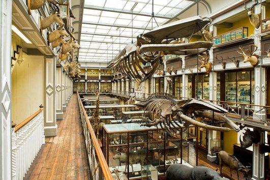 Whale Skeletons in the Dead Zoo