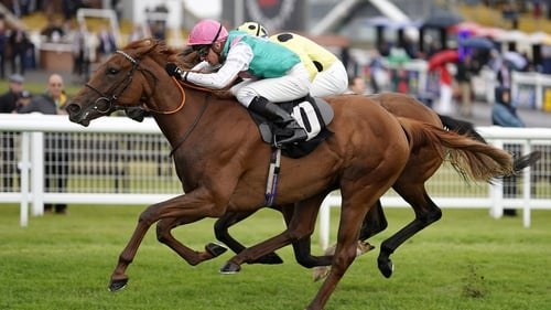 Quadrilateral was unbeaten in three starts as a juvenile