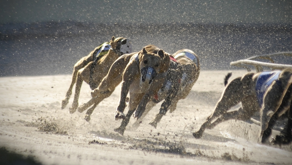 The minister said provisionof the Greyhound Act of 2019 will see improvements in greyhound traceability