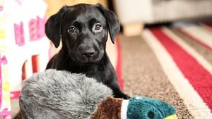 """BBC Two says the series """"will feature both adopted rescue and responsibly-bought puppies, that face a range of behavioural challenges a new puppy can present, from the first ever walkies to toilet training fails""""Photo: BBC Two"""