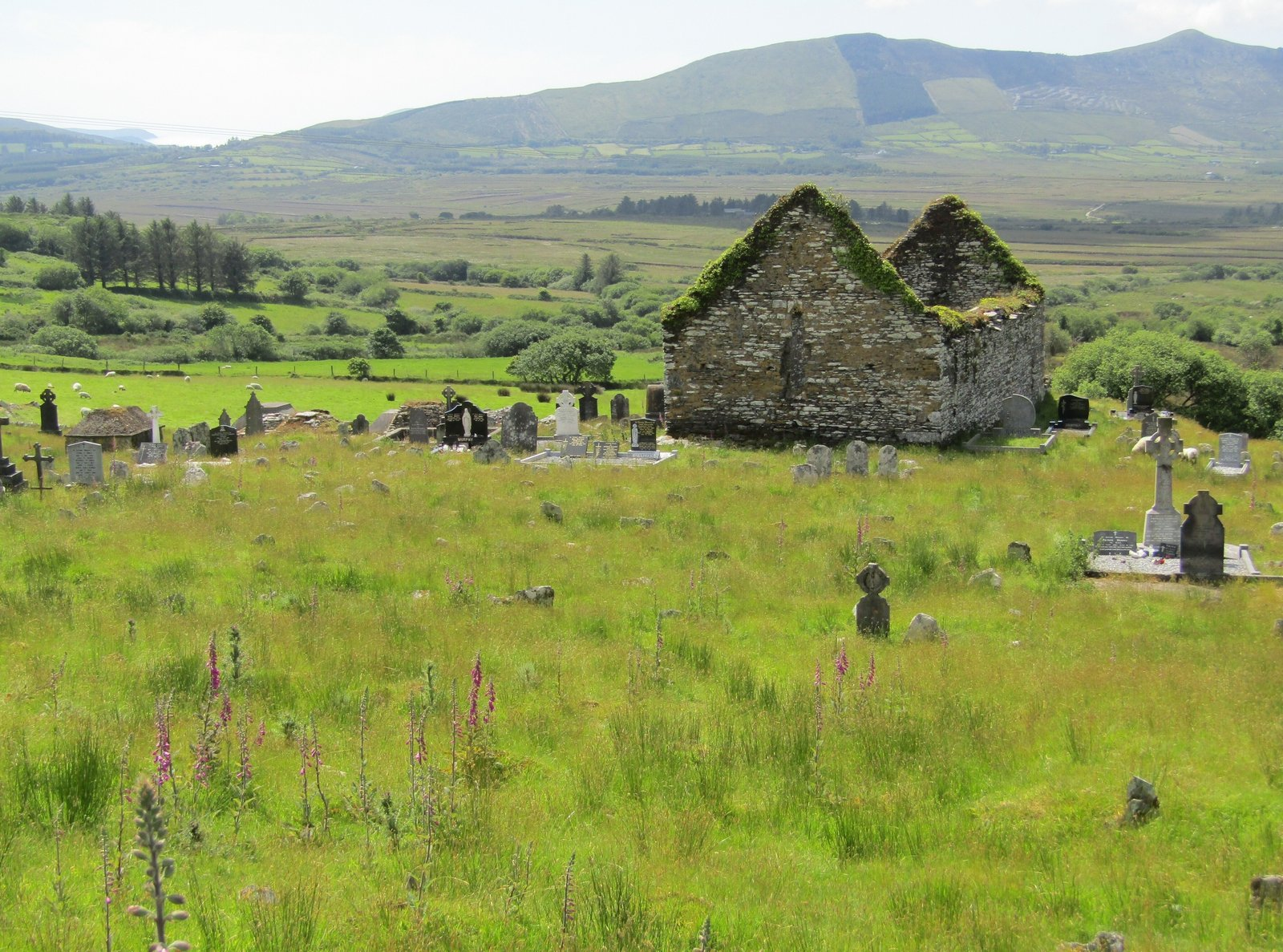 Image - Sugreana cemetery near Cahersiveen, Co. Kerry where many victims of starvation and disease were buried. [Photo: John Crowley]