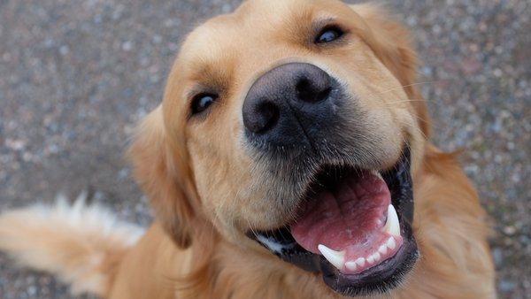 Dog behaviour expert Samantha Rawson joined Ray D'Arcy on RTÉ Radio 1 to share her advice for new pet owners.