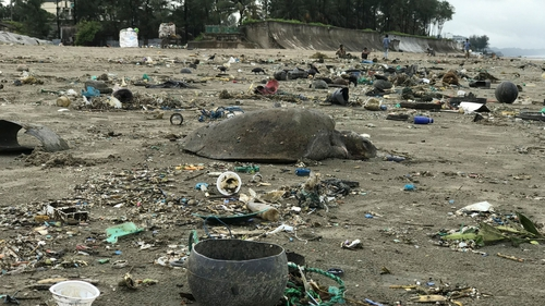 Many of the turtles sustained injuries from being caught in the estimated 50 tonnes of waste floating in a 10km stretch along the coast