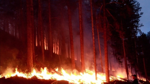 A wildfire rages in a forest in the Buryatia area of Siberia