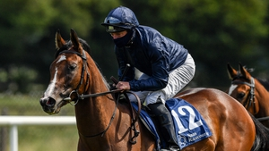 More Beautiful goes in the Airlie Stud Stakes