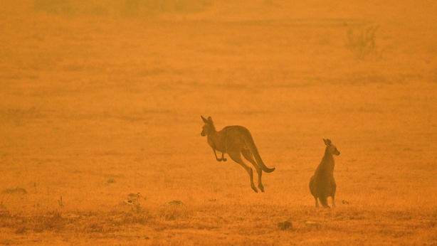 About 3 billion animals harmed in Australian bushfires, WWF says