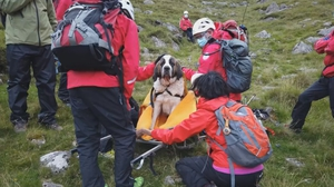 It was Daisy's second time being rescued (Image: Wasdale Mountain Rescue Team)