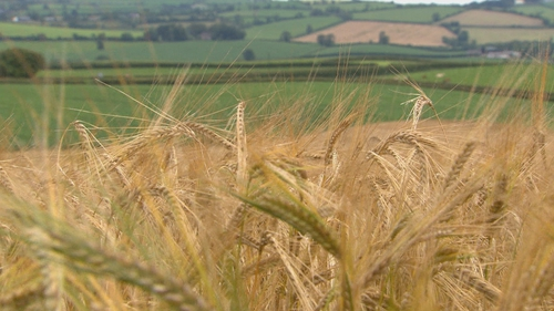 Since the early 1980s, there has been a 42% fall in the amount of land used for growing crops