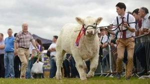Niall and Brendan Canning in action at Tullamore Show with All Ireland winner Sagesse Martha