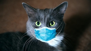 Could our domestic cat population be somehow involved in this pandemic? Photo: Viacheslav Rubel/ Shutterstock