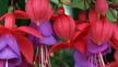 Naturefile - Alien wildflowers